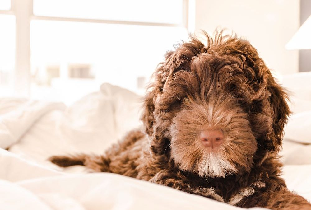 Easy carpet cleaning tips for pet owners