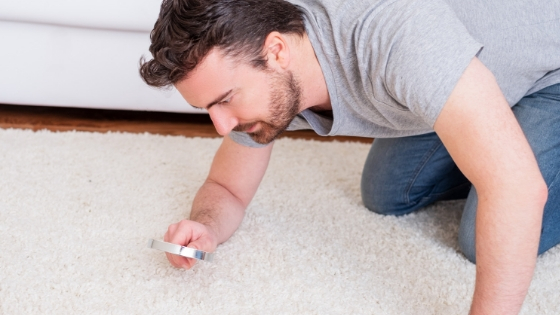 The top [3] things that live in your carpet