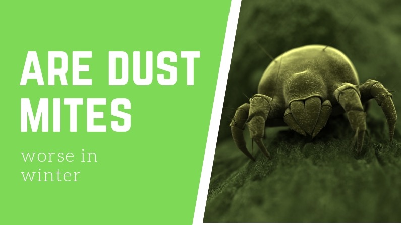 Are dust mites worse in winter?